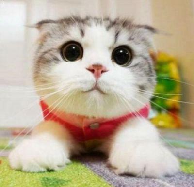 matza cute
