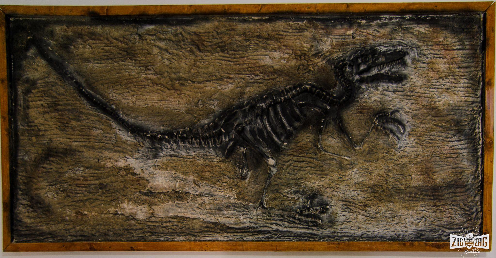casa dinozaurilor pitici schelet