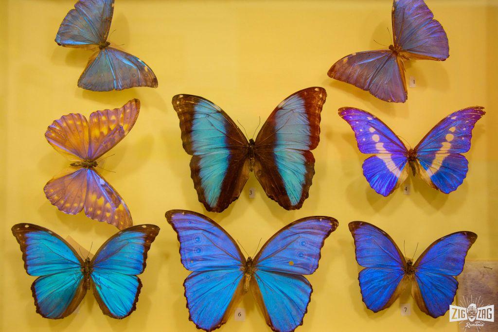 Colectia de Insecte Zalau